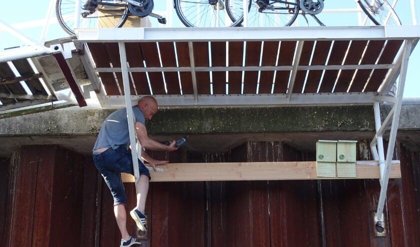 Jeroen Spaander van Arnhems Peil plaatst de eerste vleermuiskasten.  Belangrijk is dat ze minstens op drie meter hoogte hangen.