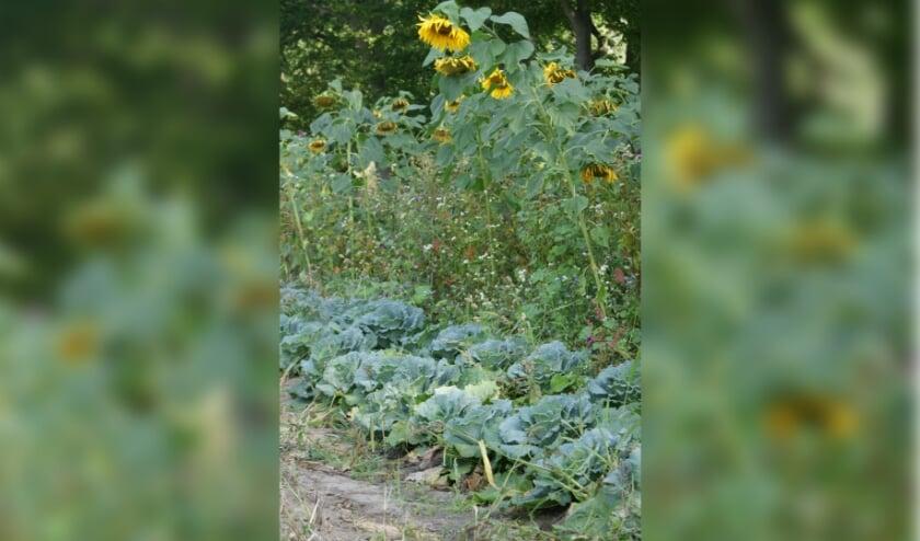 <p>Op de akkers van Herenboerderij worden diverse soorten groenten en fruit geteeld.&nbsp;</p>