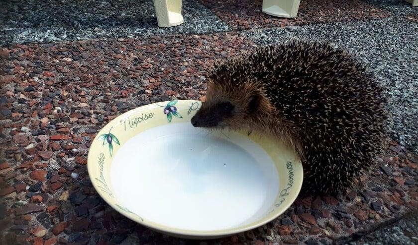 Zet een bakje water neer voor de dieren.