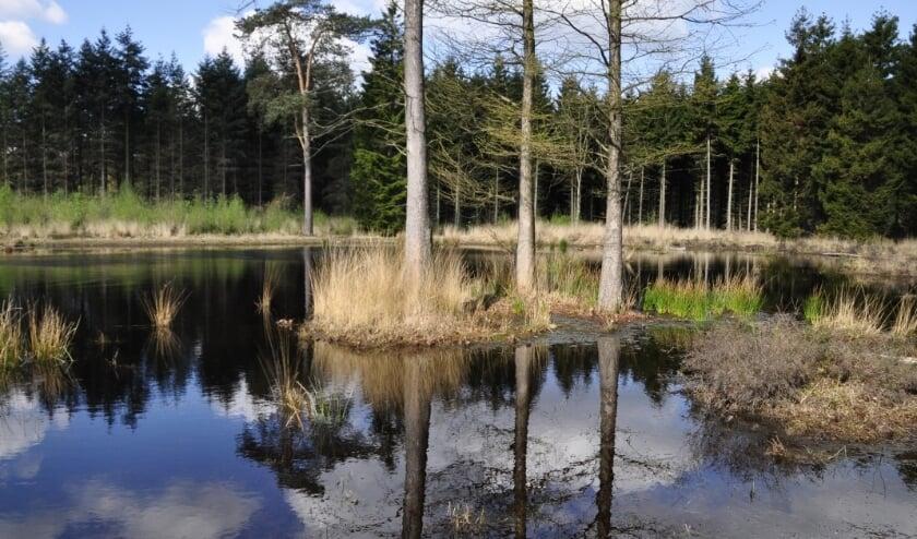 De Stiphoutse Bossen, een fraai natuurgebied dat ook het nodige onderhoud vereist.