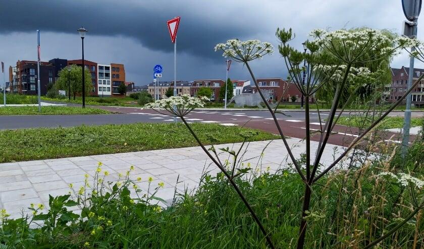 <p>(foto: Daphne Wennekes - winnaar Witte Schuur)</p>