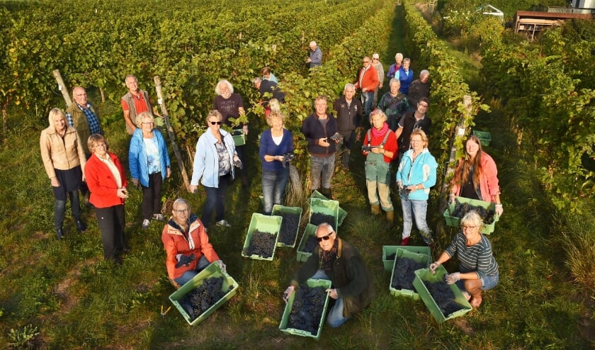 Leon Masselink tussen een aantal druivenplukvrijwilligers, onder wie Marga Stellaard. (foto: Roel Kleinpenning)