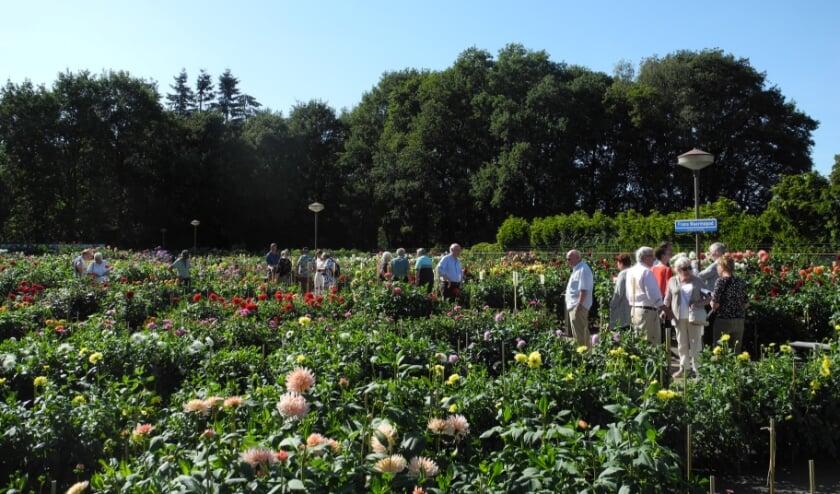 <p>De tuin van Bloemenvereniging Flora is zaterdag 12 en zondag 13 september ook te bezoeken. FOTO: Flora.</p>