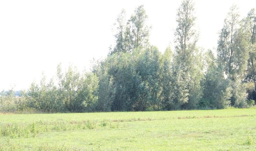 <p>Veel bomen en struiken zijn de afgelopen tientallen jaren van landbouwgrond verdwenen door specialisatie en schaalvergroting.</p>