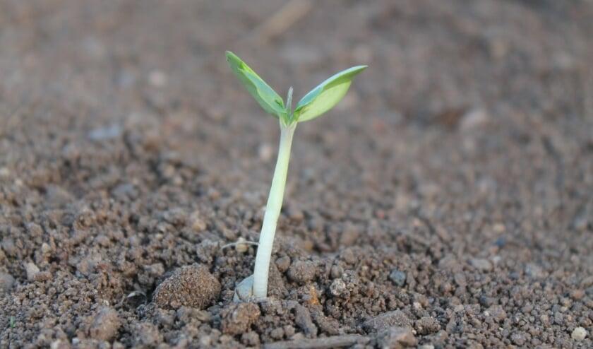 <p>Jonge aanplant heeft water nodig. FOTO: PixaBay.</p>