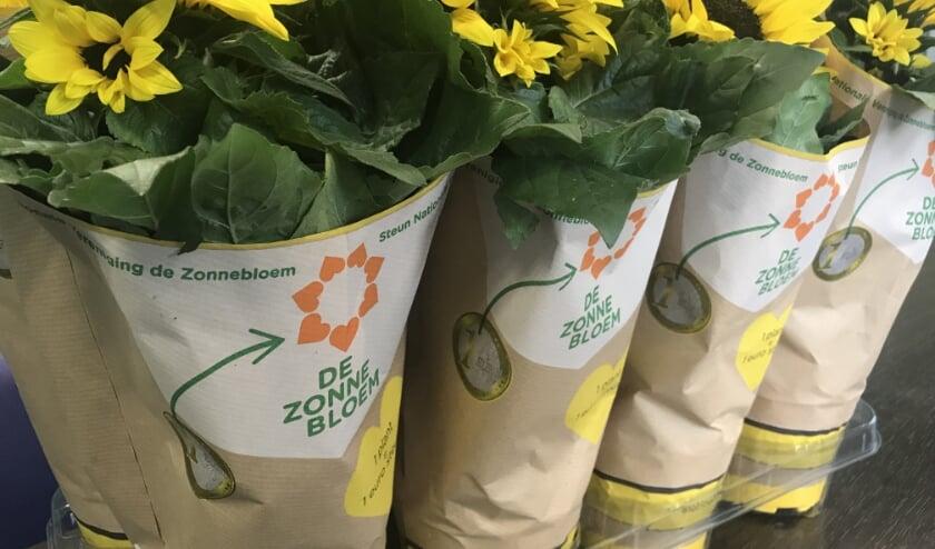 <p>Voor Nationale Ziekendag zijn voor de regio maar liefst zo&#39;n 2.000 zonnebloemen gekweekt. FOTO en TEKST: Walter de Haas.</p>