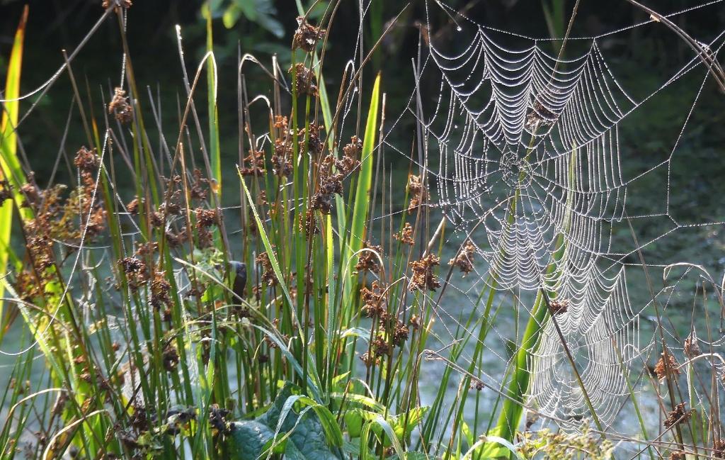 spinnen vangnet Foto: Huib Groeneveld © DPG Media