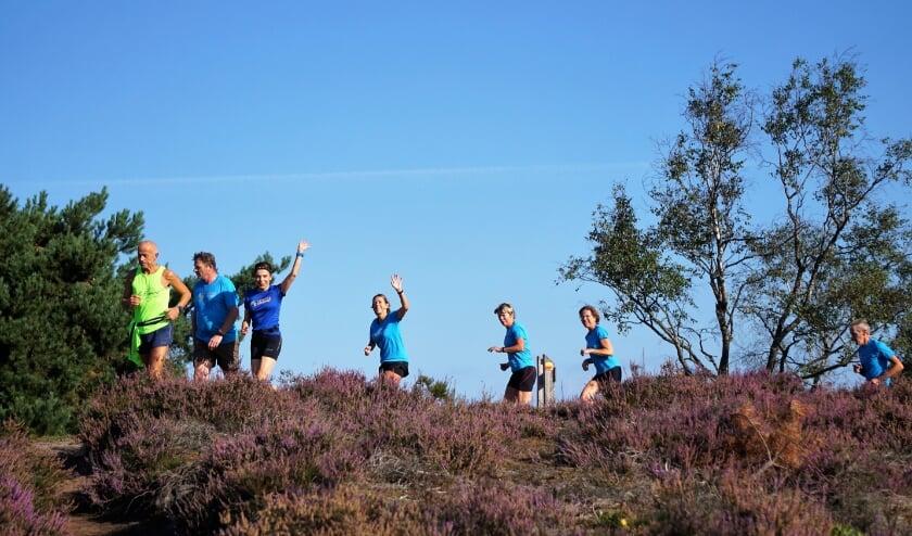 <p>Blauwe lucht, de purperen hei: Atletiek Oirschot en de Bali-Runners hadden een mooie dag. Foto: Ad van Zelst</p>