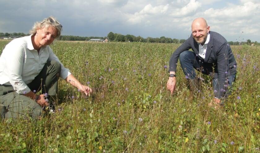 <p>Ine Nijveld en Jacob Heitman wijzen plukjes hei aan op de Zunasche heide. (Foto:Leo Polhuijs)</p>