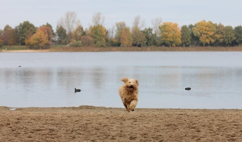De recreatiegebieden zijn geschikt voor een wandeling of ravotten op het strand met de hond. Het hondenseizoen loopt tot en met 30 april 2021.