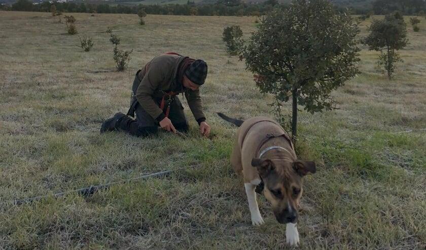 <p>Martijn zoekt ook in Spanje naar truffels, zoals in Ronda (ten noordwesten van Marbella).</p>