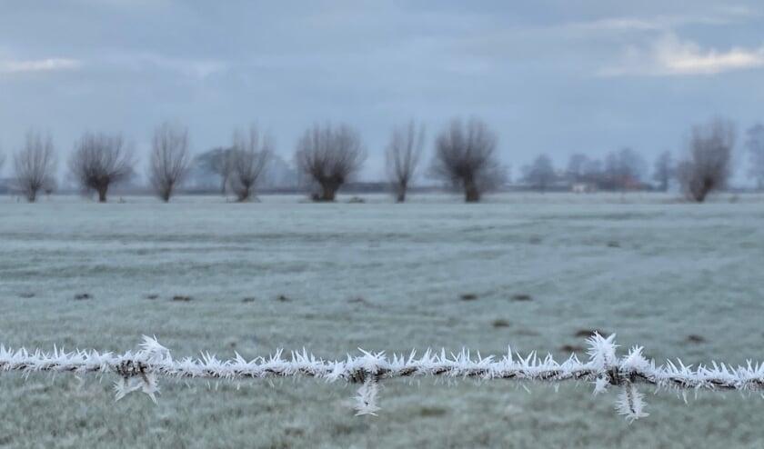 Rijp op het prikkeldraad, de winter is in aantocht