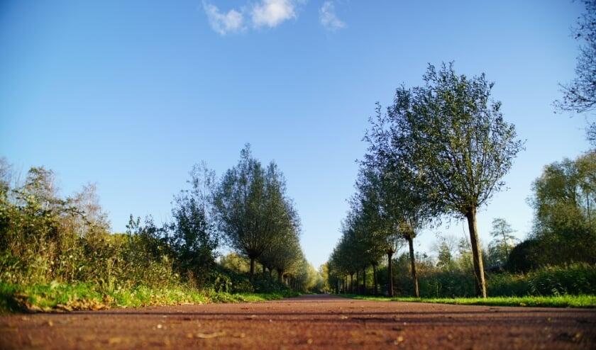 <p>De gemeente Rijswijk wil van het Wilhelminapark een echt stadspark maken.&nbsp;</p>