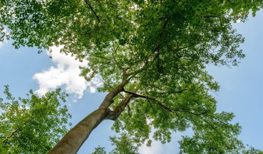 <p>Groeien bomen in Veldhoven wel of niet tot aan de hemel FOTO: PixaBay.</p>