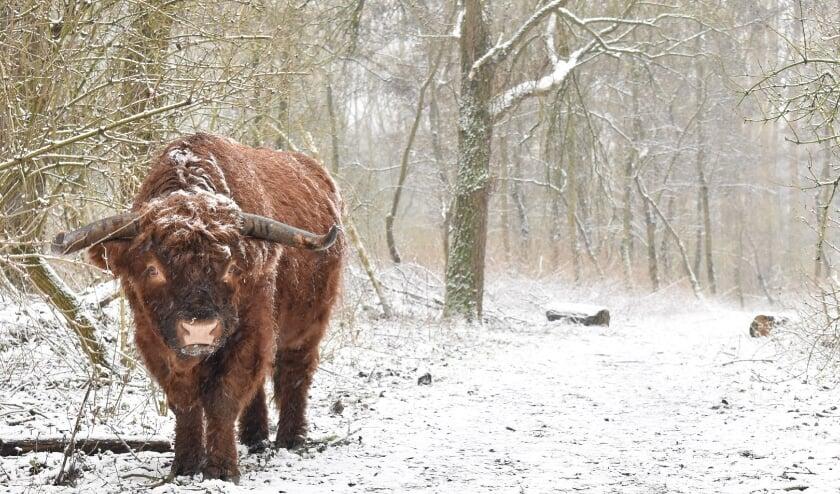 <p>Winterfoto Broekpolder</p>