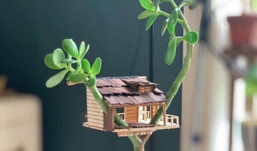 <p>Zo kan ook jouw plant er binnenkort uitzien, want we geven een bouwpakket weg!</p>