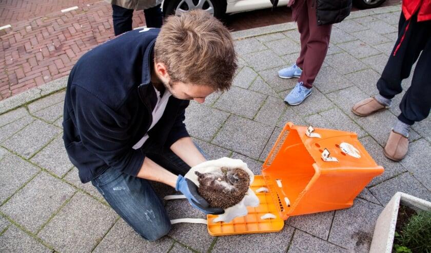 <p>Met goede vervoerskratten kunnen de gewonde dieren veilig en met niet te veel stress vervoerd worden.&nbsp;</p>
