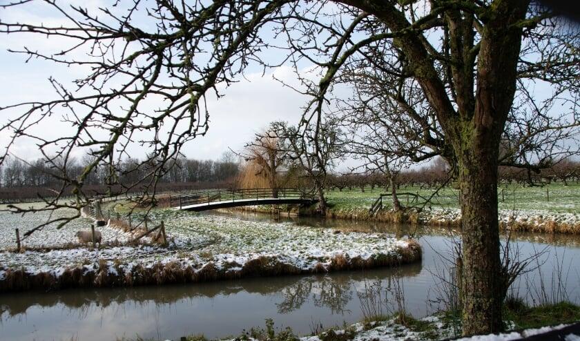<p>Winterlandschap in Buurmalsen.&nbsp;</p>
