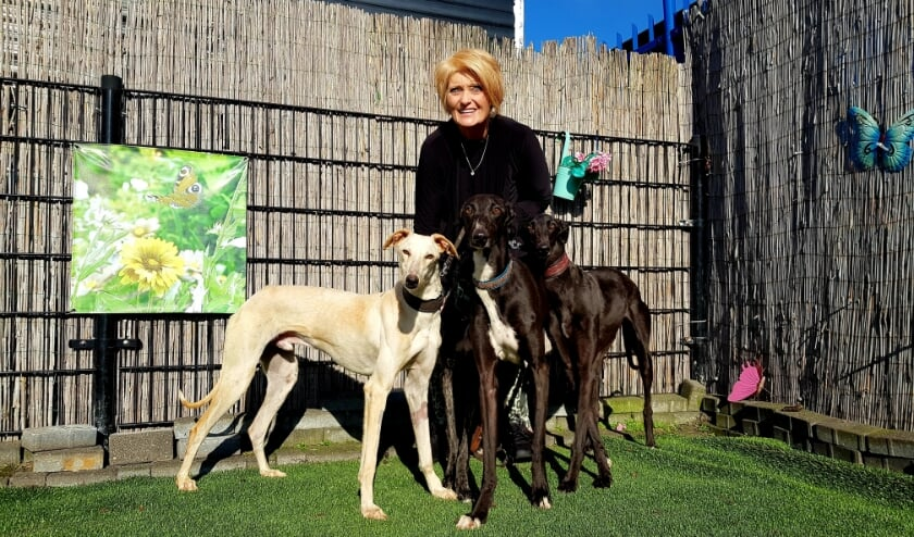 <p>Susanne met de vier jonge galgo&#39;s (een was een beetje cameraschuw), net gered uit Spanje. &quot;Wie wil ons adopteren?&quot;</p>