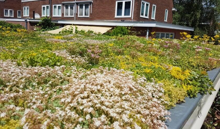 <p>Met een groen dak beperk je het effect van het veranderende klimaat in je omgeving.</p>