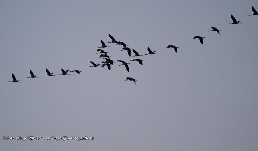 Kraanvogels over Silvolde