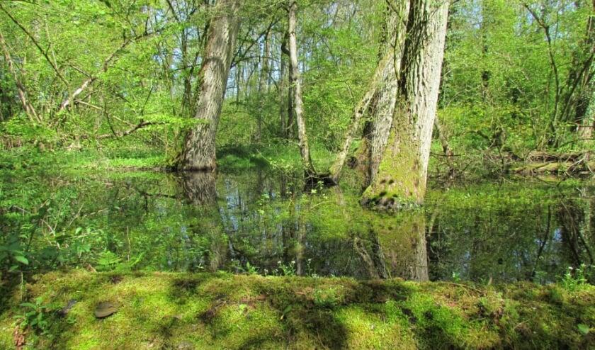 <p>Ontwerpteams dragen met hun ontwerpen bij aan verhoging van de ecologische waarden van Hooge Beek.</p>