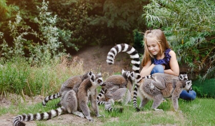 <p>Zooparc Overloon is het Leukste Uitje van Brabant.&nbsp;</p>