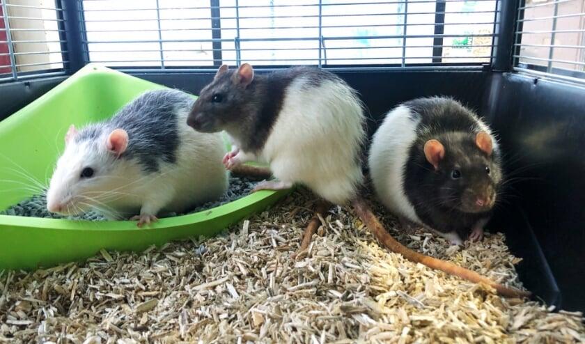 <p>Jack, Skunk en Flip willen samen verhuizen naar een nieuw thuis.&nbsp;</p>