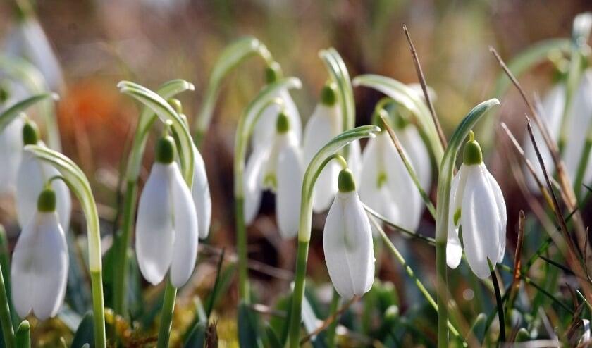 <p>Het voorjaar dient zich aan in natuurtuin Diddersgoed in Veenendaal.</p>