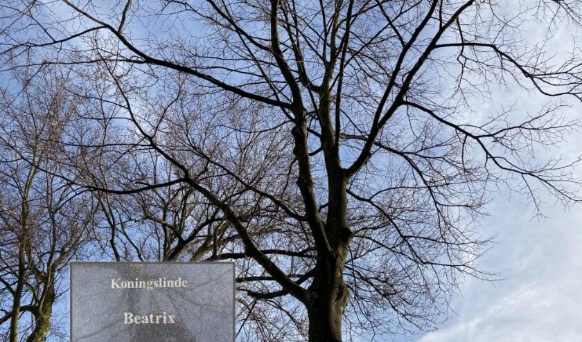 De Beatrixboom op de Veerdam