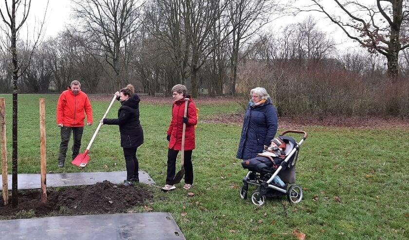 <p>Onlangs werd door de familie van Henk Kersten een rode esdoorn geplant als herinnering aan Henk die ook bekend was als de bomenman.</p>
