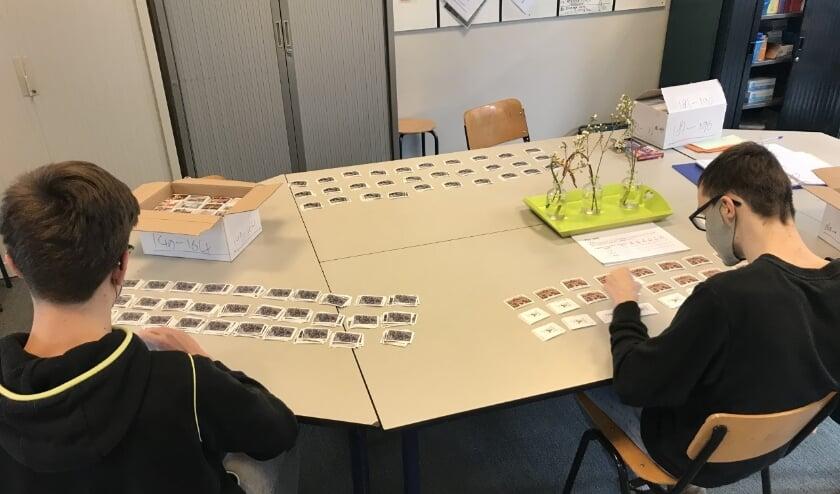 Leerlingen van VSO Parcours sorteren in totaal 185.000 plaatjes. (foto: Noor den Biggelaar)