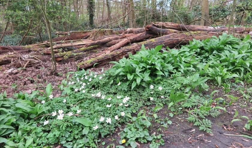 <p>Dood hout in het Schollebos; een plek voor nieuw leven!</p>