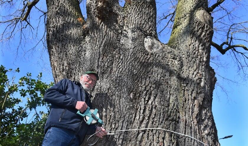 Joop Keizer meet de omtrek van de boom.
