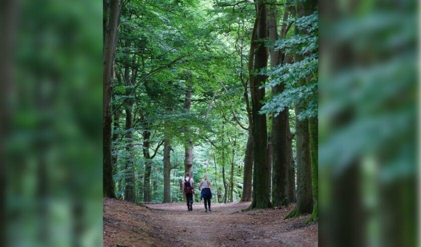 <p>Meer mensen dan ooit genoten het afgelopen jaar van de natuurgebieden van Utrechts Landschap.</p>