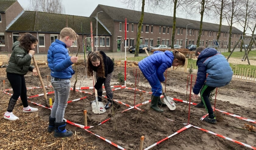<p>Heel zorgvuldig plantten de leerlingen van SBO Westerwel de bomen voor het nieuwe, kleine bos dat aan het Biervlietplein verrijst. Het minibos heeft de toepasselijke naam &#39;Litte Forrest&#39; meegekregen. &nbsp;</p>