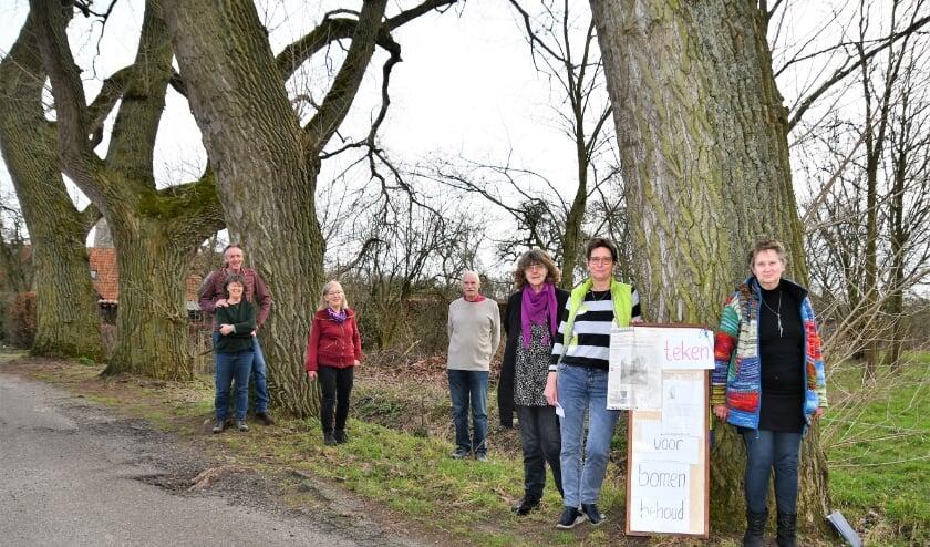 De 'buren van de bomen' vinden het doodzonde als de populieren in de Leeuwerikstraat gekapt worden. Er zijn betere oplossingen, stellen zij.