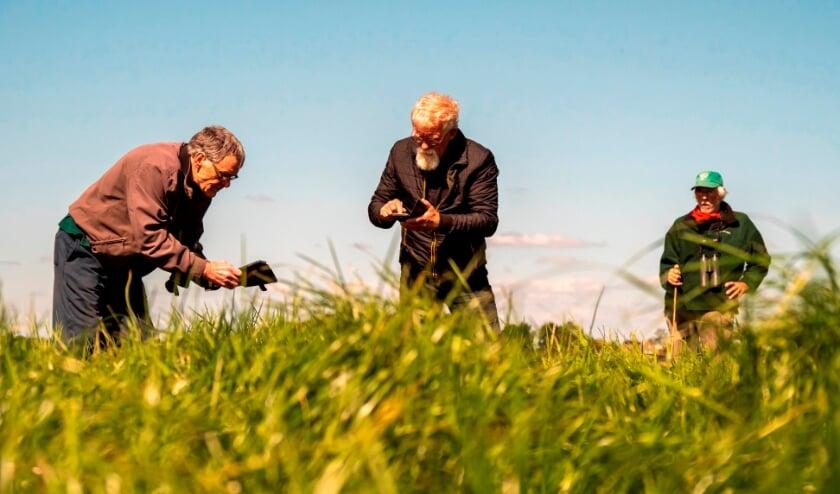 <p>Voor ge&iuml;nteresseerden die mee willen helpen bij de bescherming van weide- en akkervogels wordt op 17, 24 en 31 maart een driedelige online cursus gegeven. Foto: Brabants Landschap</p>