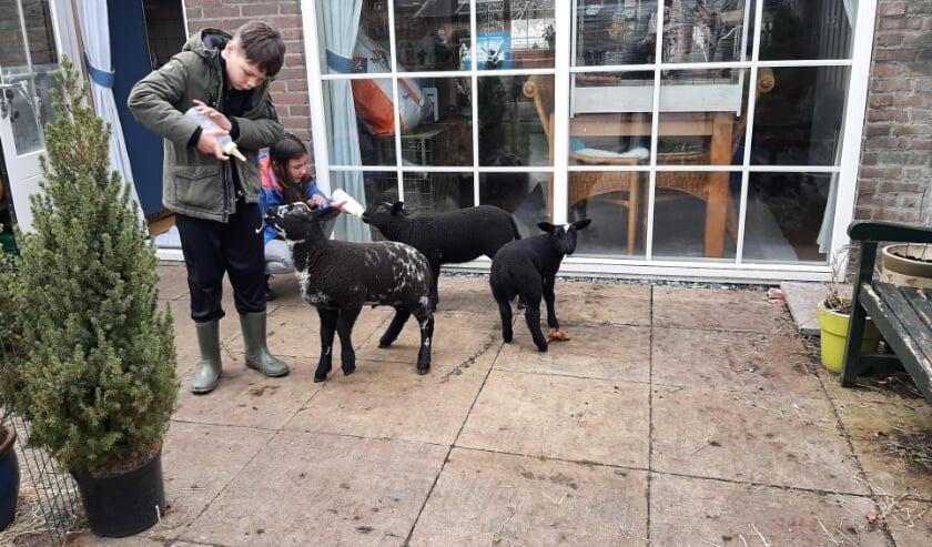 <p>Kleinzoon Siep en buurmeisje Romy komen graag langs om de lammetjes te voeden. Foto: Naomi Wijling&nbsp;</p>
