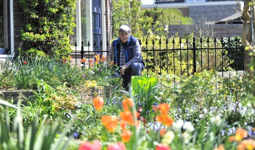 <p>Wiebe Selders werd maandagmorgen in zijn tuin met oranje tulpen verrast met de Koninklijke onderscheiding. Foto: gertbudding.nl&nbsp;</p>