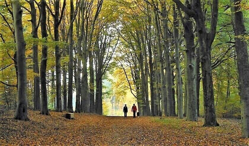 <p>Een ommetje door het bos.</p>