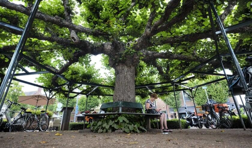 <p>In 2020 werd de Moeierboom in Etten-Leur gekozen tot De Boom van het Jaar. Deze werd uiteindelijk 6e tijdens de Europese verkiezing.</p>