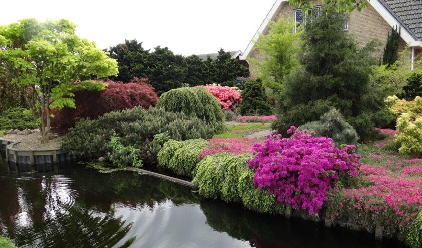 <p>Een bekroonde Boskoopse tuin. De organisatie hoopt op meerdere tuinen.&nbsp;</p>