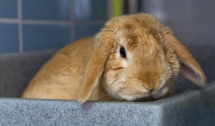 <p>Fili wil graag samenwonen met een leuke konijnendame.</p>