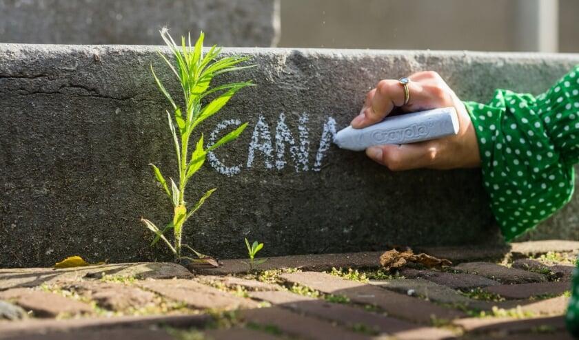 <p>Pak je stoepkrijt en geef wilde planten die tussen de stoeptegels groeien een naam.&nbsp;</p>