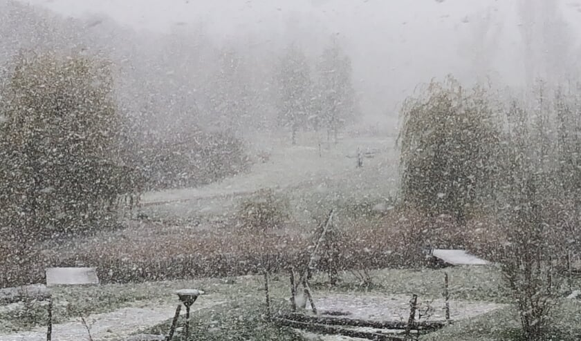 <p>Sneeuwbui in Park&nbsp;</p>