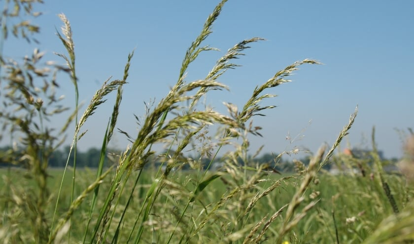 <p>In april, mei en juni wordt er extra aandacht aan grassen besteed.&nbsp;</p>