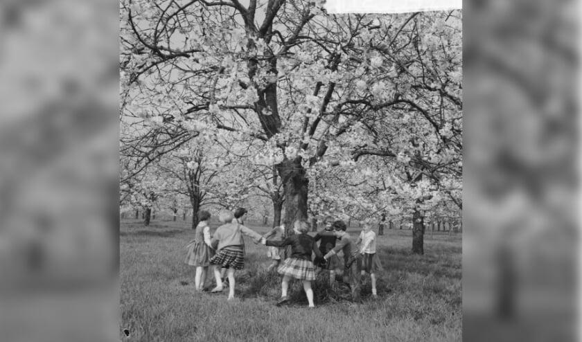 Spelen in de boomgaard, Betuwe jaren 50.