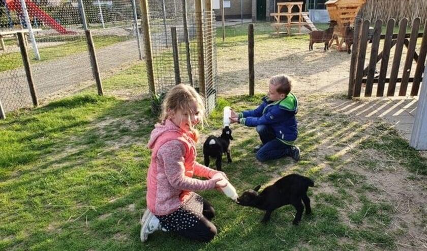 Kinderen geven jonge geitjes de fles.