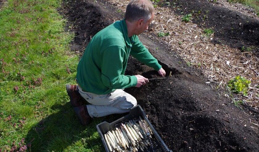 <p>Harm oogst asperges en werkt graag met groen</p>